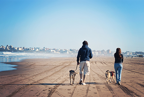Couple walking two dogs along beach