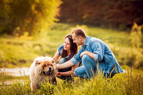 Couple patting Chow Chow lying on grass